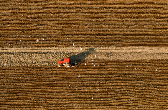 Spring plowing and birds