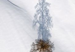 Shadow and tree  tree and shadow