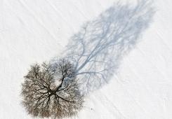 Tree and shadow  shadow and tree