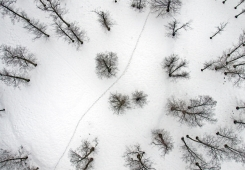Aerial photography: winter, snow, trees, path ... nice ;)